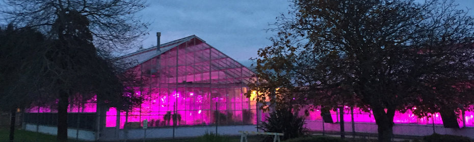 Beautiful LED lights in the PGEC greenhouses